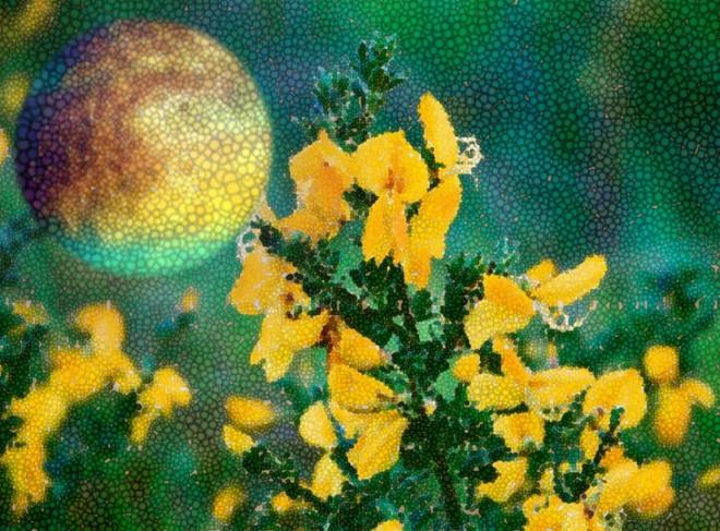 Crofter's moon